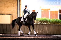 Dressage Display William ||