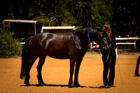 WA Bred & Percentage Classes