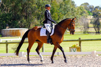 Penny Hill Park Rising Star Horse Class
